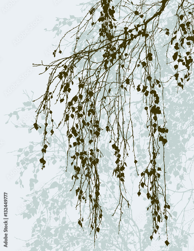 birch branches in the fall