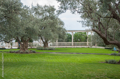 Keuken foto achterwand Begraafplaats olive trees and lawn in an exotic park in high quality