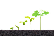 Agriculture. Nurturing Young Baby Plants Growing In Germination Sequence On Fertile Soil Isolated