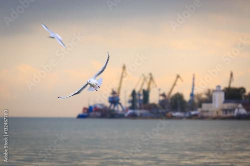 Foto auf Gartenposter Stadt am Wasser Две белые чайки летят на фоне морского порта