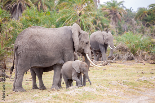 Foto op Aluminium Hyena Some elephants are walking in the savannah of Kenya