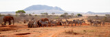 A lot of animals, zebras, elephants standing on the waterhole, Kenya safari
