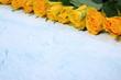 Róże dla ludzi pełnych miłości