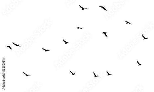 Staande foto Vogel a flock of birds on a white background