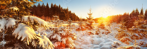 Fotobehang Zwavel geel Winter Forest Landscape Panorama, Germany