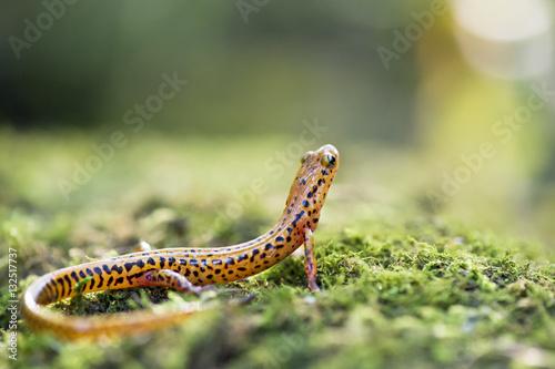 Fotografie, Obraz  Salamander Lookout