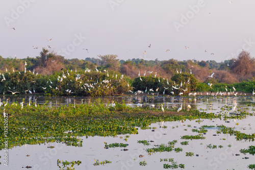Fotografija  Beautiful Pantanal landscape, South America, Brazil