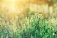 Abstract Natural Sunny Backgro...