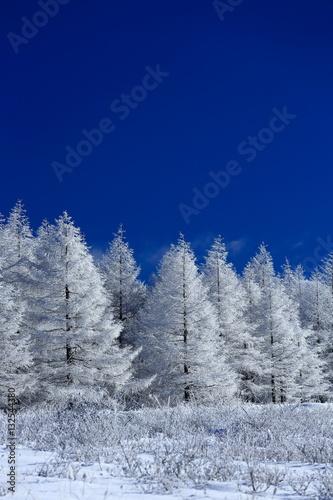 Fototapeta  霧ヶ峰の霧氷
