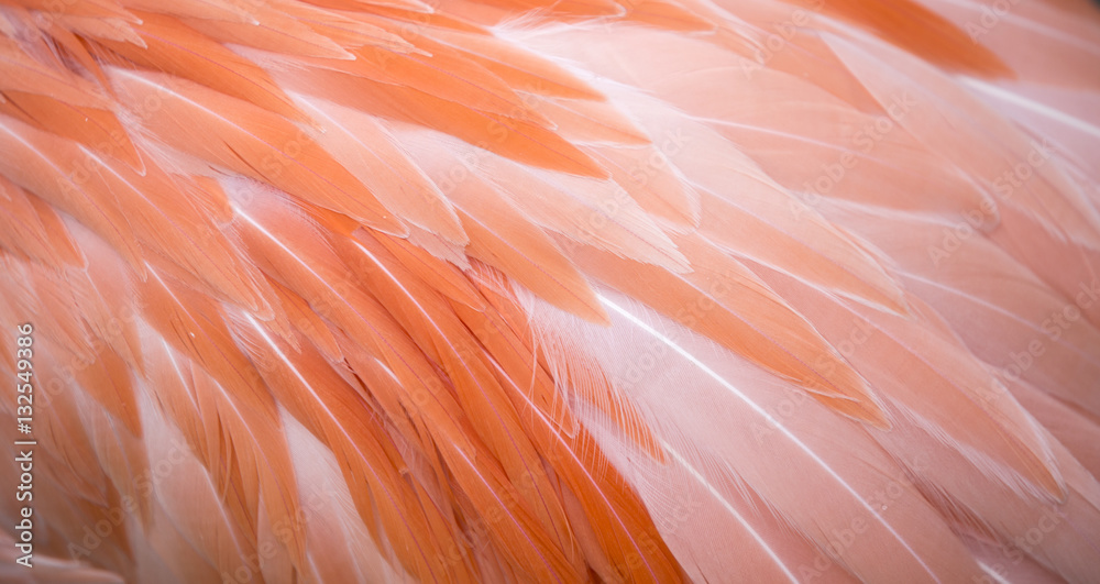 Flamingo feather background