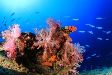 Fototapeta na wymiar Underwater fish school on ocean coral reef