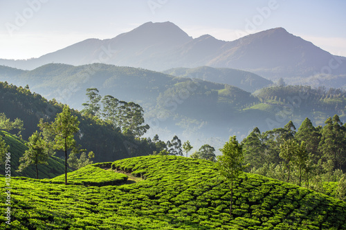 Foto auf Gartenposter Hugel Tea plantations in Munnar, Kerala, India