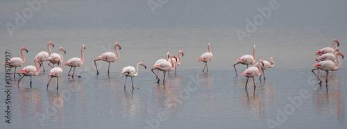 Garden Poster Flamingo pink flamingos on swamp background