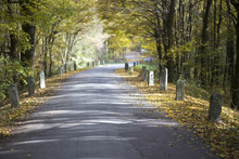 Colored Autumn And An Old Road...