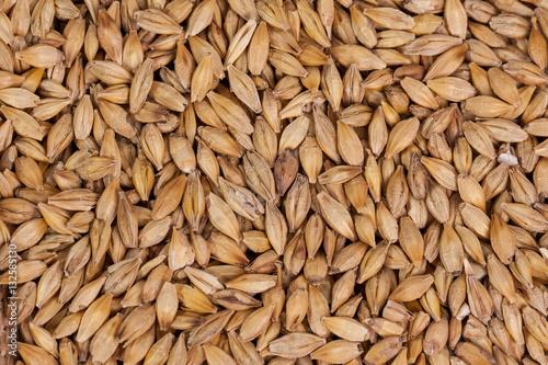 Fotografija Barley beans