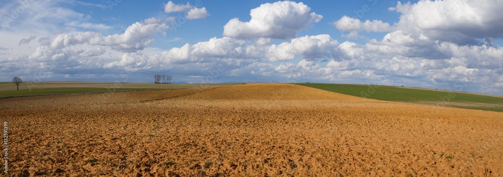 Fototapeta Paisaje Panoramico de Campos con Barbechos y Cultivos y Cielo con Nubes Algodonosas