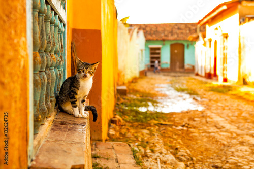 Cat in the colonial town Trinidad, Cuba Canvas Print