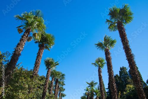 Fotografía  Row palm trees against the sky