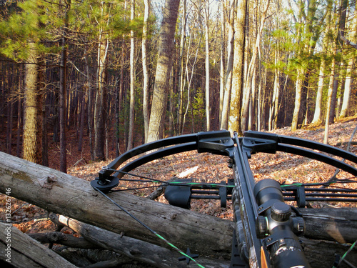 Canvas Print crossbow resting on tree trunk in autumn woods