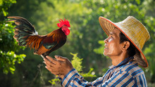 Farmer And His Chicken