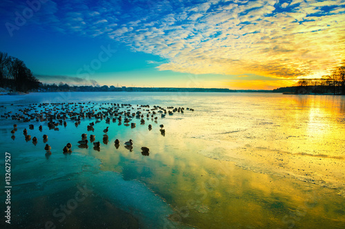 Obrazy Polska the-sun-sets-over-the-surface-of-the-ice-winter-colorful-landscape-with-resting-birds-masuria-poland