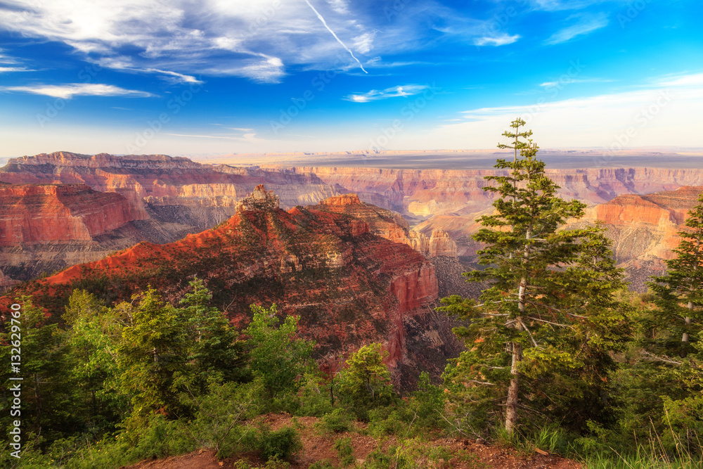 Zypressen am North Rim - Grand Canyon