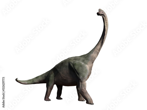 Photo  Brachiosaurus altithorax from the late Jurassic isolated on white background (3d