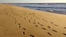 Footprints In Sand On Coast