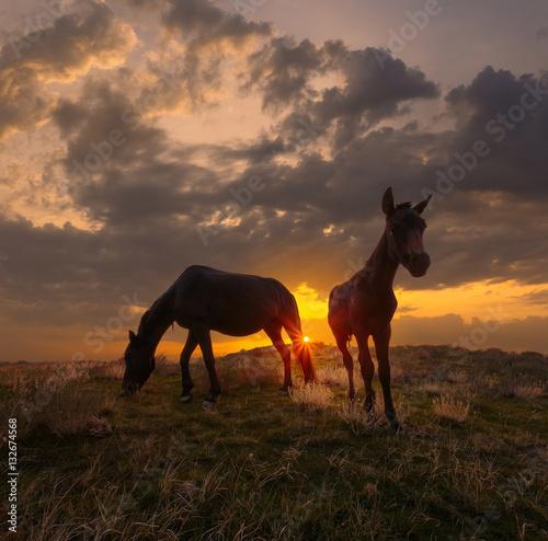 Photo  Beautiful sunrise landscape with horses