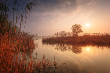 Obraz na Szkle Rzeki i Jeziora Beautiful misty sunrise landscape. Foggy river. High reed on foreground.