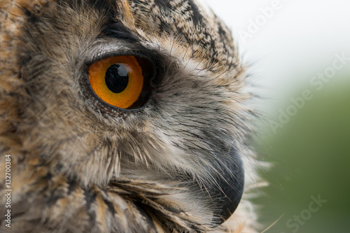 Cadres-photo bureau Chouette Eagle Owl Profile