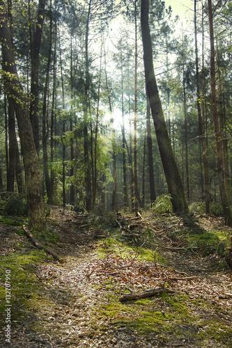 Foto op Plexiglas Landschappen Forrest with the sun shining through the trees