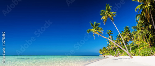Poster Tropical plage Panorama of tropical island with coconut palm trees on sandy bea