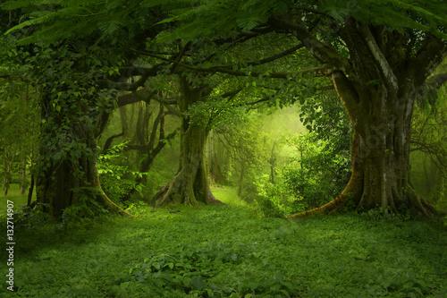 Fototapeta Deep tropical jungles of Southeast Asia in august obraz na płótnie