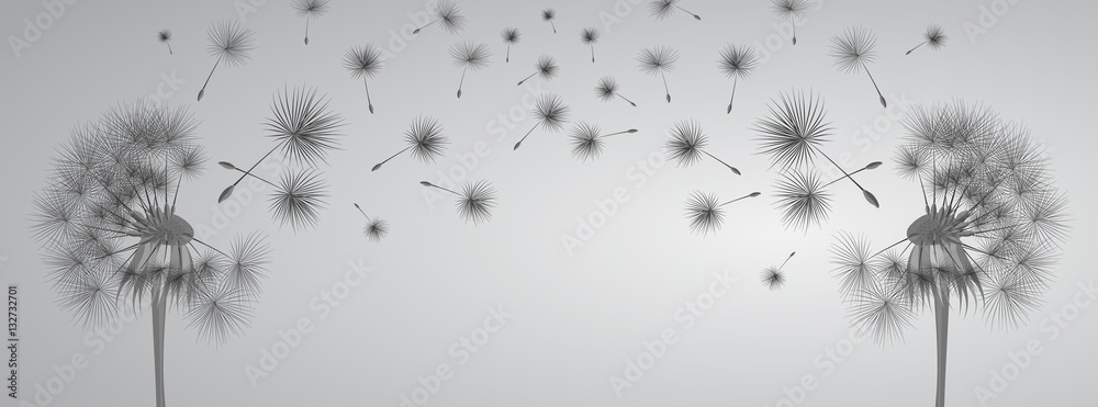 Fototapety, obrazy: Dandelion on grey background. Flying spores. Concept of wishing, tenderness and summer time.