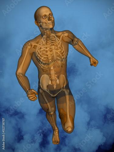 Human skeleton M-SK-POSE M4ay-05-2-tr50, 3D Model - Buy this