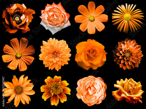 Fototapeta Mix collage of natural and surreal orange flowers 12 in 1: peony, dahlia, primula, aster, daisy, rose, gerbera, clove, chrysanthemum, cornflower, flax, pelargonium isolated on black obraz na płótnie