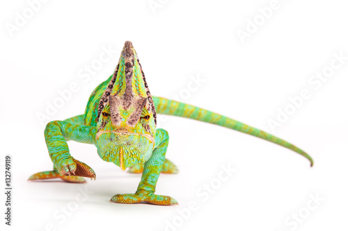 Staande foto Kameleon Veiled chameleon (chamaeleo calyptratus) close-up.