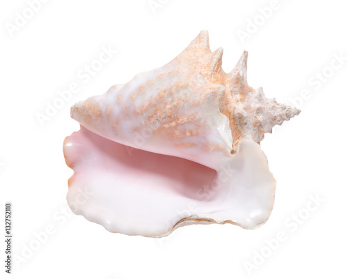 Fotografiet Large pink queen conch seashell isolated on white background