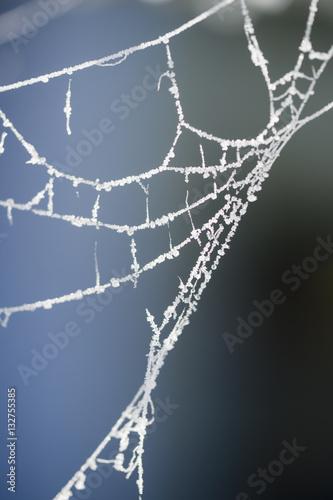 Fototapety, obrazy: Spinnennetz mir Raureif