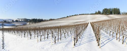 Wall Murals Vineyard Winter Snow In the Grape Fields of Western Oregon