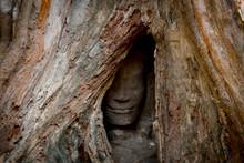 Cambodia Angkor Wat Ta Phrom Stone Face In A Tree Root Hidden