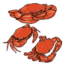 Vector Crab Drawing On A White...