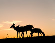 Group of Deer with beautiful sky