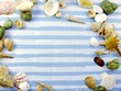 summer concept sea shell background with space for text