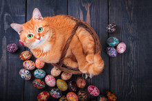 Cat Sitting In The Basket On A Wooden Background With Easter Eggs.