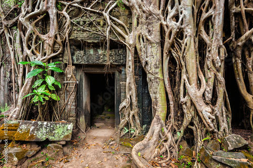 Foto  Ancient ruins of Ta Prohm temple, Angkor, Camb