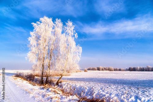 Podlasie zimą - 132858582