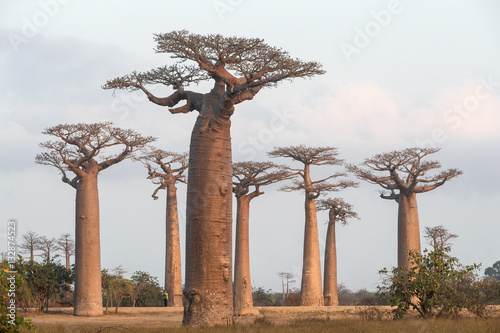 At The Avenue of the Baobab trees, Madagascar.