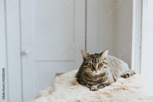 Portrait of cat lying on fluffy blanket
